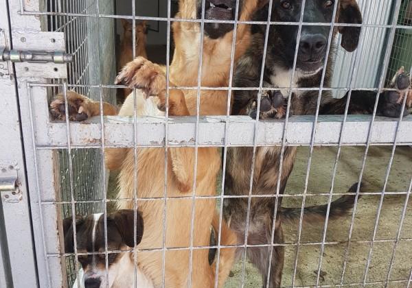 perro abandonado perrera