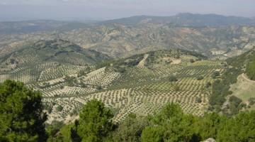 Creacion-de-energia-a-partir-de-residuos-de-la-industria-olivarera