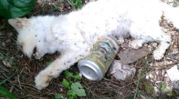 Uno de los animales envenenados. FOTO: PACMA