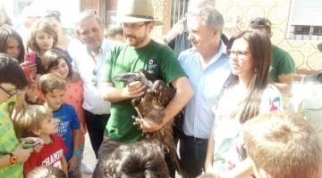 Ortega-suelta quebrantahuesos Larva 03-06-17