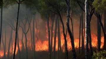 Incendio de Moguer. FOTO: EFE