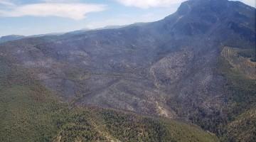 El marrón predomina en parte de la imagen, donde han ardido árboles y vegetación.