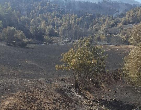 Este fue uno de los puntos donde comenzó el incendio.